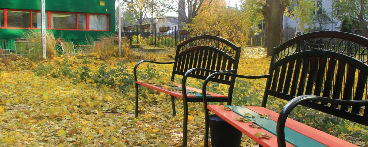 Benches in autumn with red, orange and yellow maple leaves covering the ground
