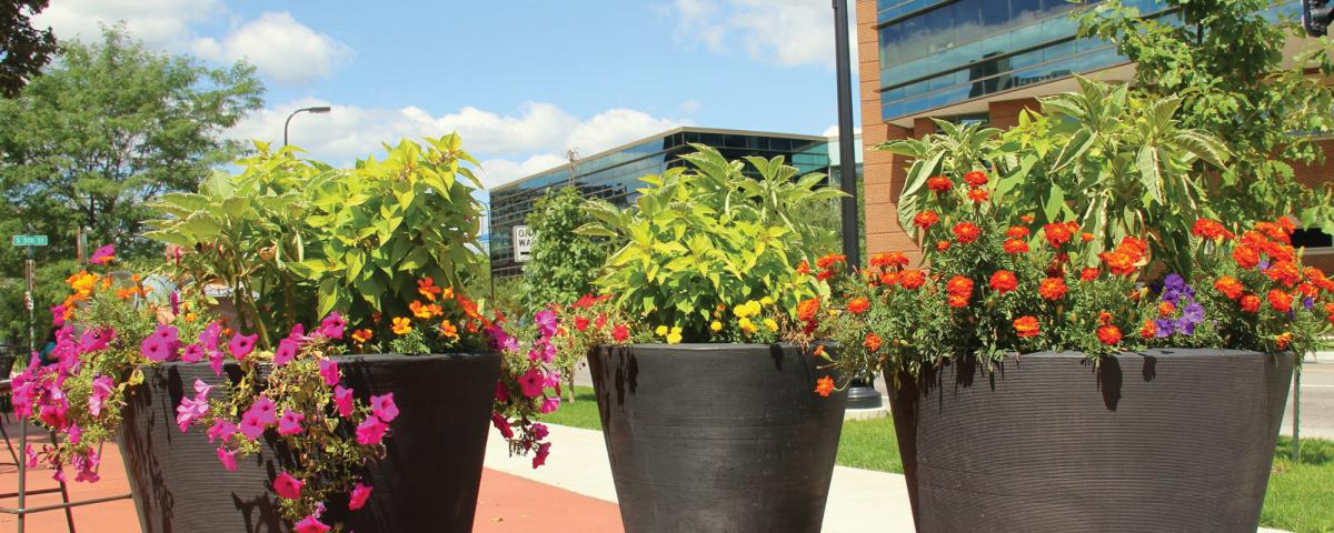 Three planters in summer